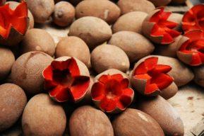 El Mamey es una de las frutas preferida por los cubanos.